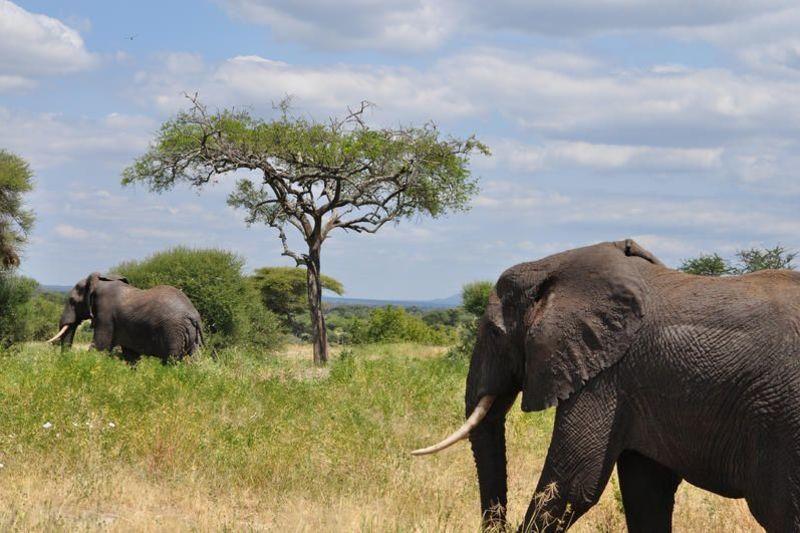 Tansania_Tarangire_Nationalpark